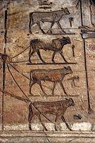 Km (hieroglyph) - Wikipedia