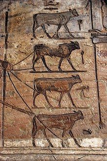 Coptic identity - WikiVisually