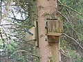 Bat boxes, Studhampton - geograph.org.uk - 1172478.jpg
