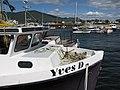 Bateaux de pêche, au quai de Carleton-sur-Mer - panoramio (1).jpg