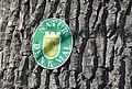 Baumgruppe (Eschenau) 011.jpg