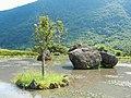 Bayan paddy field 八煙水中央 - panoramio.jpg