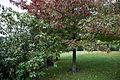Beale Arboretum shrub and tree in lawn West Lodge Park - Hadley Wood Enfield London.jpg