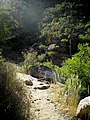Bear Canyon Trail - panoramio.jpg