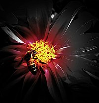 Bee on a flower in an Exhibition 2.jpg