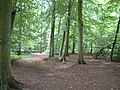 Beech wood from Long Toll - geograph.org.uk - 37071.jpg