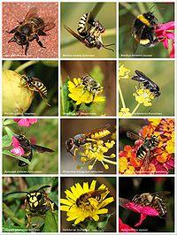 Bees and Wasps.jpg