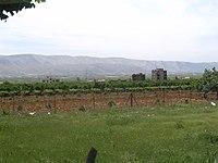 200px-Beqaa-vineyard.JPG