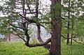 Beryozovsky District, Krasnoyarsk Krai, Russia - panoramio.jpg