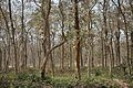 Bethuadahari Wildlife Sanctuary - Indian National Highway 34 - Nadia 2013-03-23 7086.JPG