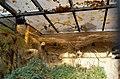 Bienenfresser und Wiedehopf (Zoo Dresden).jpg