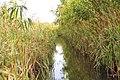 Bilozers'kyi district, Khersons'ka oblast, Ukraine - panoramio - 7777777kz (46).jpg