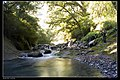Bilyu Creek in the green forest.jpg