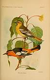 Birds of California in Relation to the Fruit Industry (1910) (14565383369).jpg