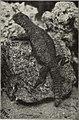 Blätter für Aquarien- und Terrarien-Kunde (1905) (20361637336).jpg