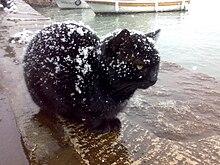 Cat Spraying Feet Forum Site Www Catforum Com