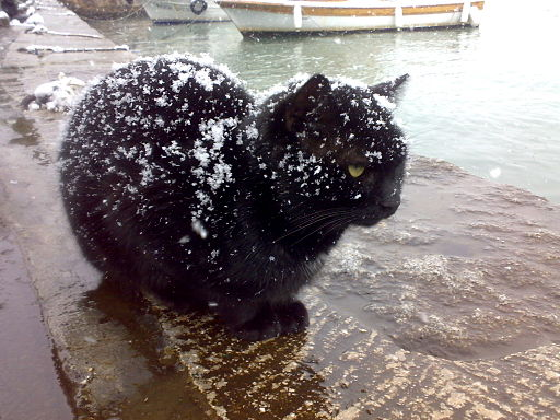 Black cat being snowed on