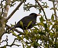 Blackbird - Flickr - gailhampshire.jpg