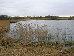 Blae Loch, eastern bank looking south.JPG