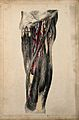 Blood vessels of the thigh. Coloured lithograph by G.E. Made Wellcome V0008162.jpg