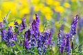 Blooms52 (9094632882).jpg