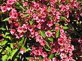 Blume 3.jpg