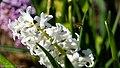 Blumen (10 von 16).jpg