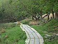 Boardwalk on a bridleway - geograph.org.uk - 797971.jpg