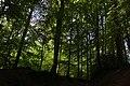 Bois du Pottelberg - Pottelbergbos 05.jpg