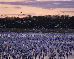 Bombay Hook NWR - birds.jpg