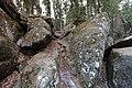 Bonsai Boulders Kananaskis Alberta Canada (16239107403).jpg