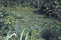 Borneo1981-044.jpg