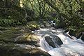 Bosque - Bertamirans - Rio Sar - 018.jpg