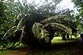 Botanic garden limbe154.jpg