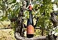 Bottle of Usakhelauri Wine.jpg