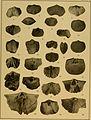 Brachiopod genera of the suborders Orthoidea and Pentameroidea (1932) (20407473015).jpg