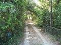 Brandon FL Moseley Homestead dwy01.jpg