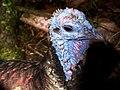 Brevard Zoo, Viera FL - Flickr - Rusty Clark (167).jpg