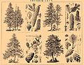 Brockhaus and Efron Encyclopedic Dictionary b73 132-2.jpg