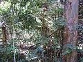 Bromélia e eucalipto.jpg