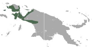 Brown dorcopsis Species of marsupial