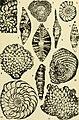 Bulletins of American paleontology (1958-1959) (20315014590).jpg