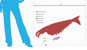 Peytoia - Scale diagram of various Burgess Shale invertebrates, Peytoia nathorsti in purple