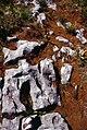 Burren-14-Flechten-Felsstruktur-1989-gje.jpg
