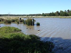 Bushy Park Wetlands - Wildlife at a permanent water source in Bushy Park Wetlands.