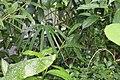 Butterfly Rainforest FMNH 40.jpg