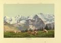 CH-NB-Souvenir de l'Oberland bernois-nbdig-18025-page031.tif
