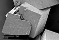 CSIRO ScienceImage 11637 Scanning electron microscope image of the seed inside the MOF crystals.jpg