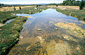 CSIRO ScienceImage 4554 Polluted stream near industrial sites just north of Adelaide SA 2002.jpg