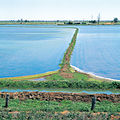 CSIRO ScienceImage 4663 Irrigation channel and flooded rice bays near Griffith NSW 1995.jpg
